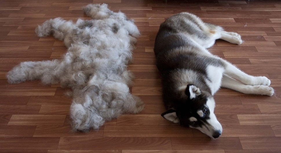 приворот на шерсть собачью и кошачью